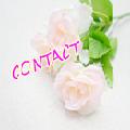 スマホ白バラ